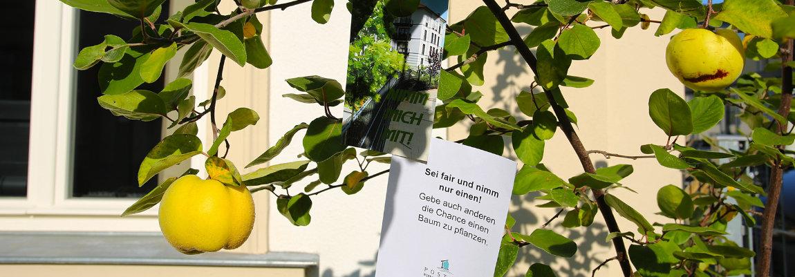 100 Bäume für Bamberg